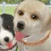 Dogz ¡Diviértete con más perros! consola