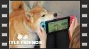 vídeos de Little Friends: Dogs & Cats